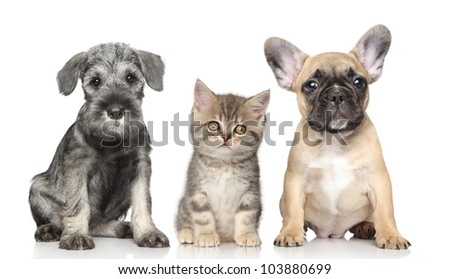 Kitten and Puppy on a white background - stock photo