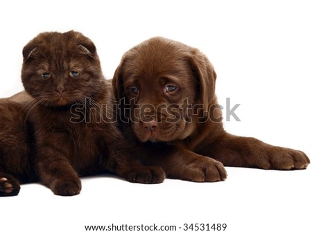 Kitten and puppy on a white background.