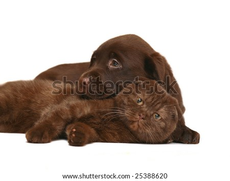 Kitten and puppy on a white background. A cat and a dog together.