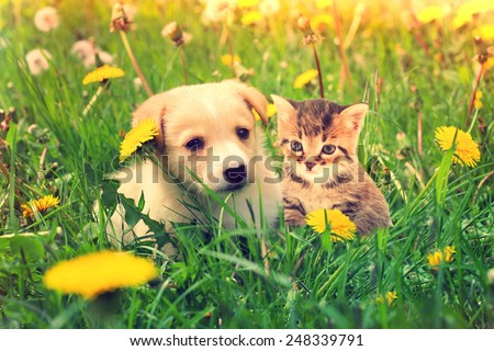 kitten and puppy outdoors - stock photo