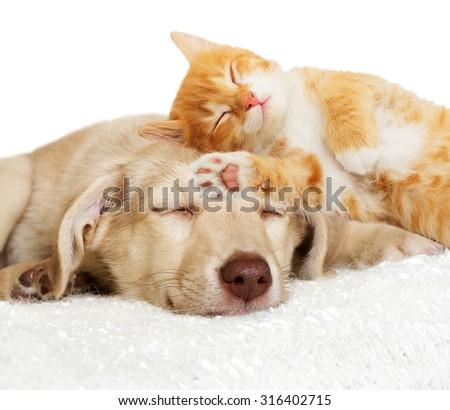 kitten and puppy sleeping - stock photo