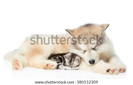 kitten and puppy sleeping together. isolated on white background. - stock photo