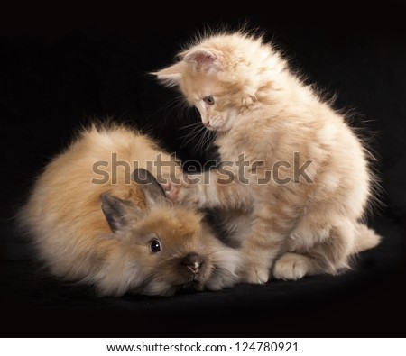 Kitten and rabbit - stock photo