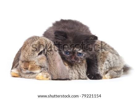 Kitten and rabbit on white