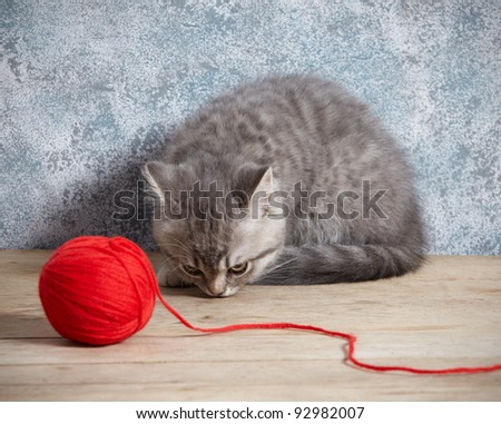 kitten and red thread ball - stock photo