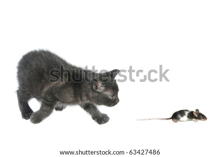 kitten and running away mouse on white background - stock photo