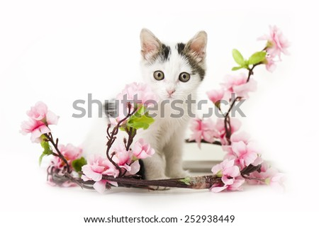 kitten and spring flower looking at camera. isolated on white background - stock photo