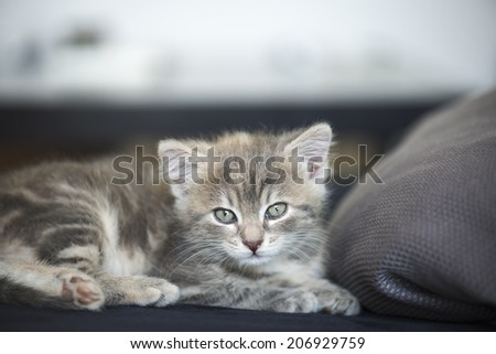 Kitten asleep on a sofa
