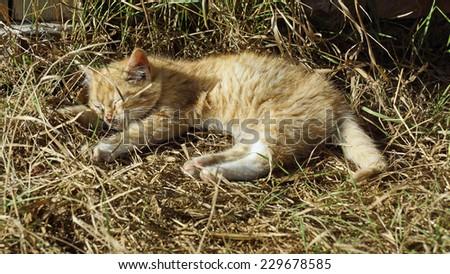 Kitten at a farm is sleeping in the sun - stock photo