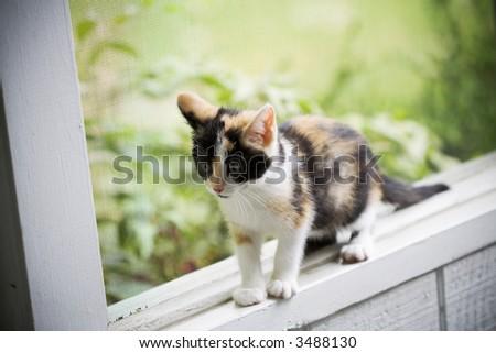 Kitten balancing on the window sill - stock photo