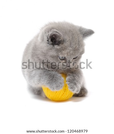 kitten ball - stock photo