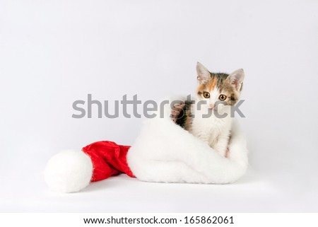 kitten (cat) in a santa hat on a white background. - stock photo