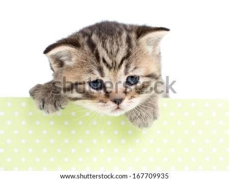 kitten cat in cardboard box isolated - stock photo