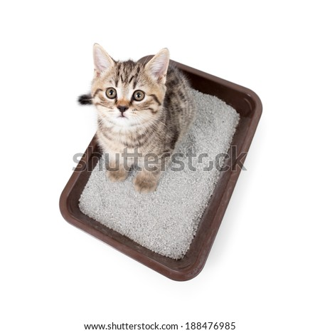 kitten cat in toilet tray box with litter top view isolated on white - stock photo