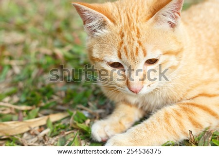 Kitten cat on green grass background. - stock photo