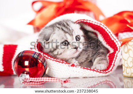 kitten christmas - stock photo