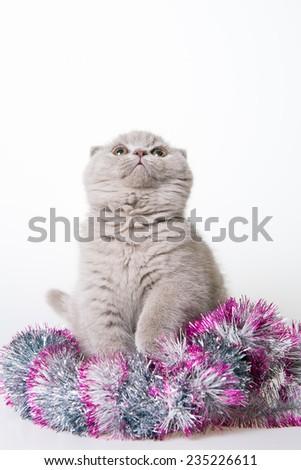 Kitten Christmas. Gray cute kitten. White background. looking up - stock photo