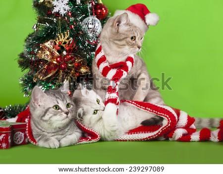 kitten christmas wearing santa hat - stock photo