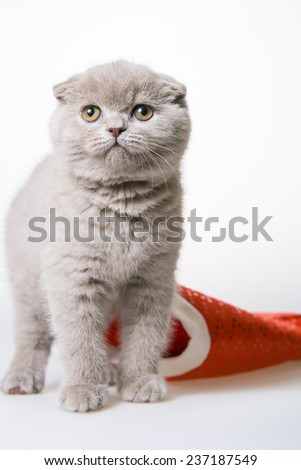 kitten climbed out of the hat of Santa Claus, gray kitten in a red hat on a white background, the end of the holiday, crawled out from under his cap. Christmas card. the inscription on a white - stock photo