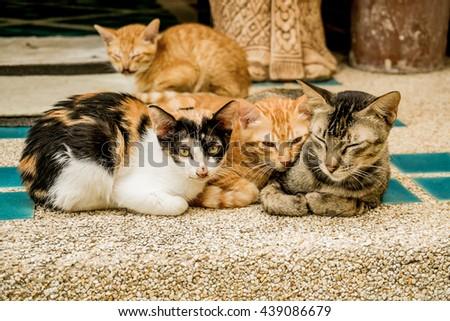 Kitten close eyes to sleep huddled together. - stock photo