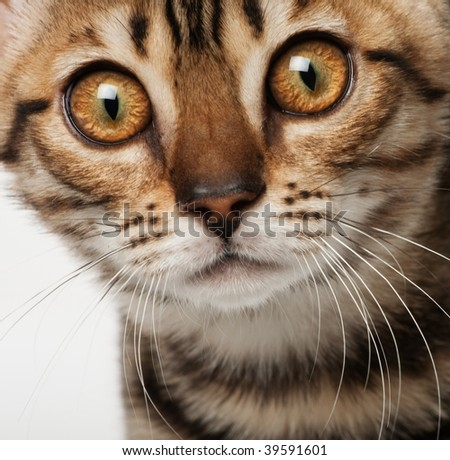 Kitten close-up portrait - stock photo