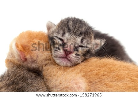 Kitten closeup face isolated on white background