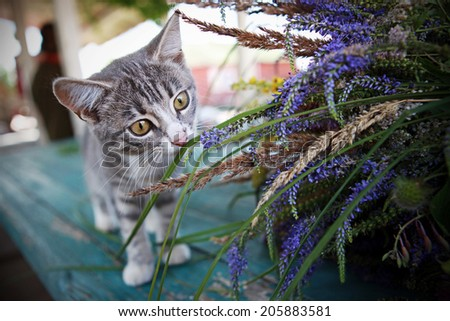 Kitten discovers the world through scent - stock photo