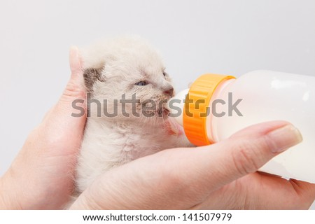 Kitten drinking milk from bottle - stock photo