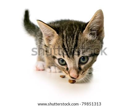 Kitten eating - stock photo