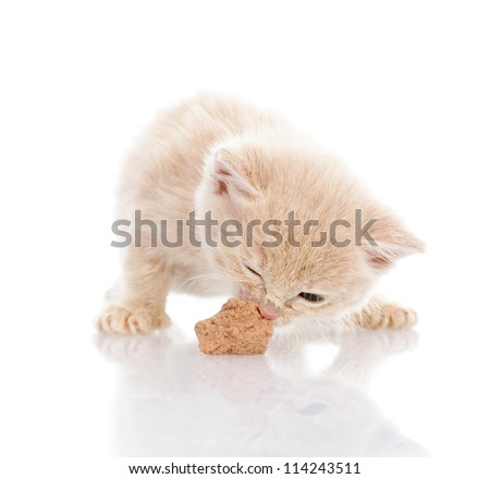kitten eating cat food. isolated on white background