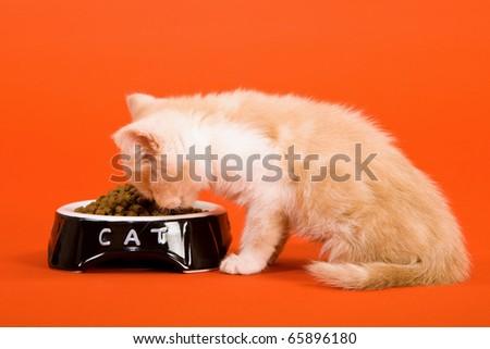 Kitten eating dry cat food - stock photo