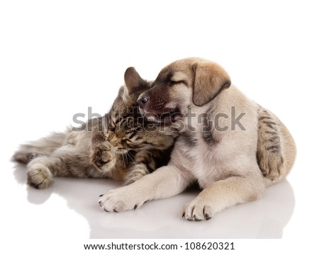 kitten embraces a puppy. isolated on white background
