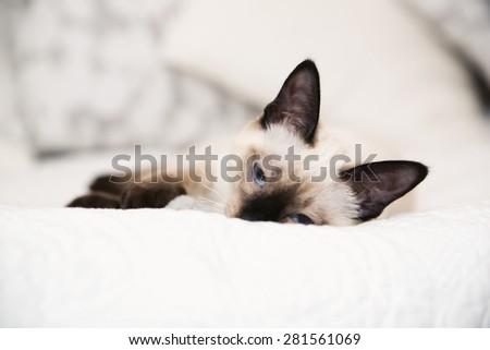 Kitten falling asleep on the white blanket - stock photo