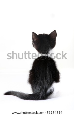 kitten from behind against a white background - cutout - stock photo