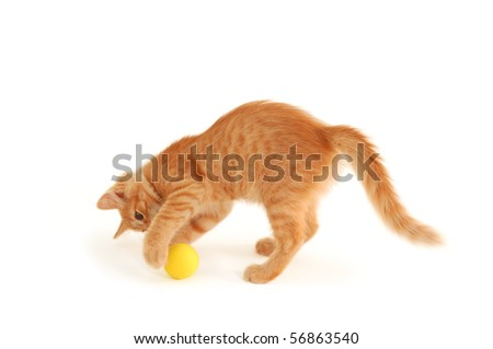 kitten funny red catch ball isolated on white background - stock photo