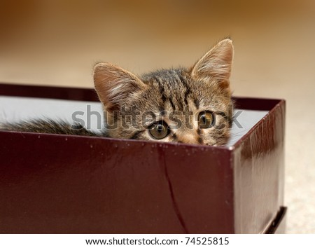 kitten has hidden and looks from a box - stock photo