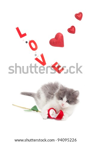 kitten holding an engagement ring for Valentine's day with the word Love and red hearts in the background - stock photo