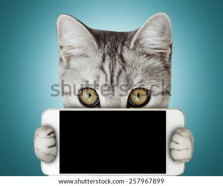 kitten holding mobile phone - stock photo