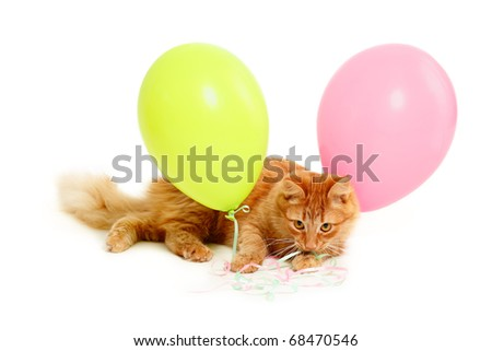 kitten holiday balloons isolated on white background