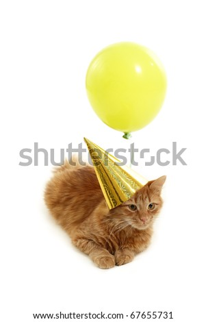 kitten holiday play with cap green balloon isolated on white background