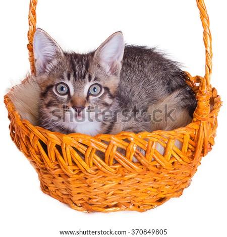 Kitten in a basket - stock photo