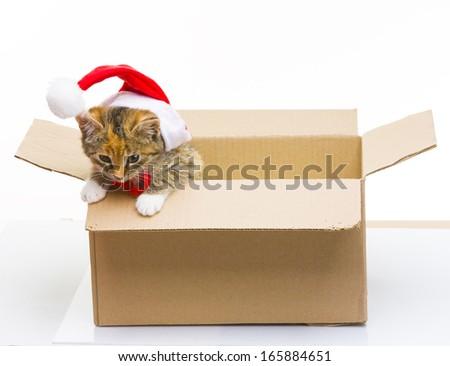 Kitten in a box - stock photo
