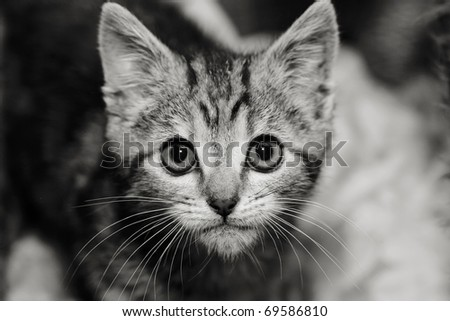 Kitten in a cage looking up. Shallow depth of field - stock photo