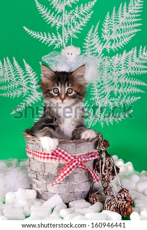 Kitten in a Christmas basket against a green background - stock photo