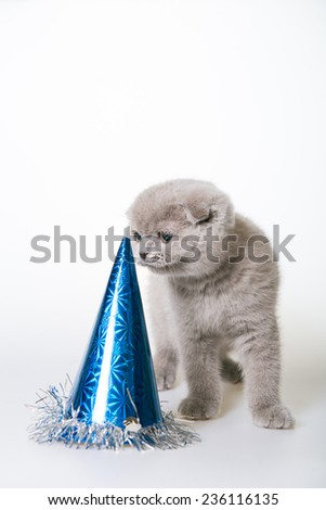 kitten in a Christmas hat. Gray kitten on a white background. New Year's card. Greeting card. cat in a blue cap. cat in the hat-bell - stock photo
