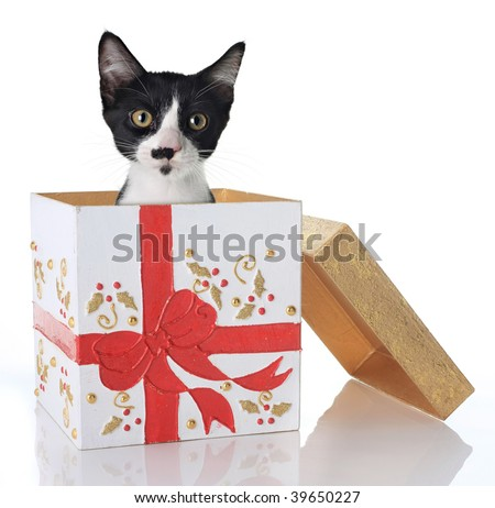 Kitten in a Christmas present - stock photo