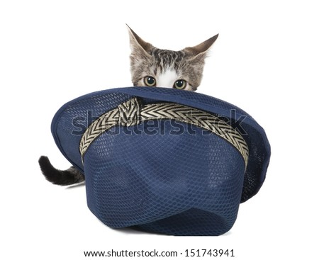 kitten in a hat on a white background in studio - stock photo