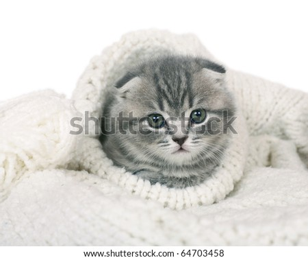 Kitten in a knitted collar. - stock photo