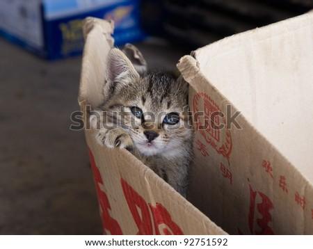 Kitten in a paper box - stock photo