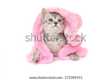 Kitten in a pink fur coat. Isolated on a white background - stock photo